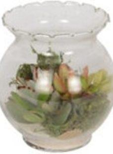 Succulent in 110