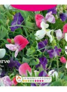 Cascading Mix Sweet pea Seed